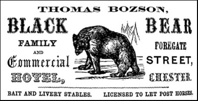 black bear advert